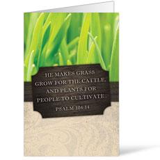 Fresh Air Grass Bulletin
