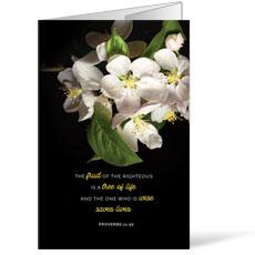 Illuminated Spring Bulletin