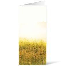 Scenic Field Bulletin