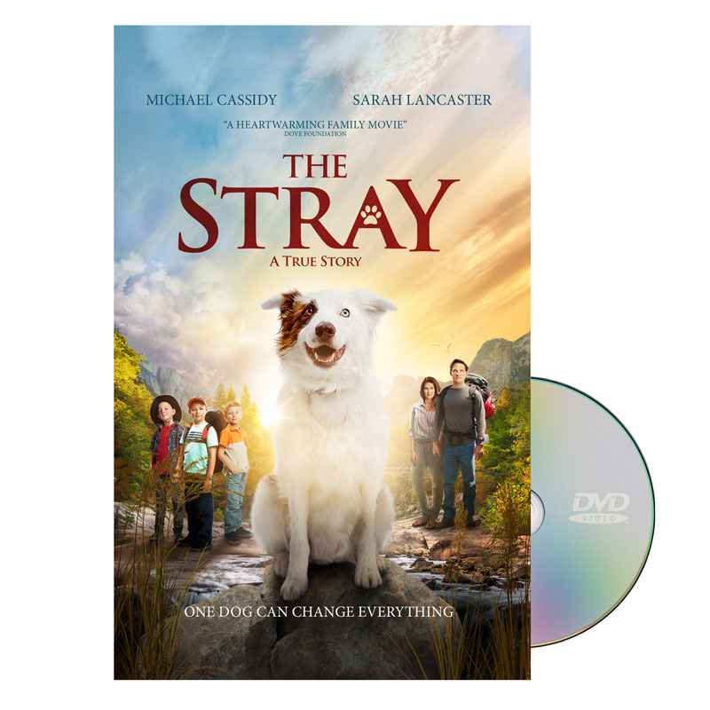 Movie License Packages, The Stray, 100 - 1,000 people  (Standard)