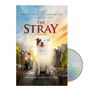 The Stray Movie License Packages