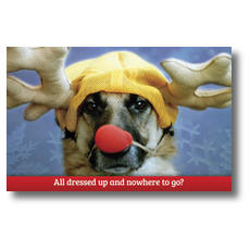 Rein Dog Postcard
