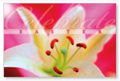 Easter Bloom Postcard