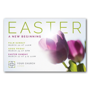 Easter Purple Tulips Postcards