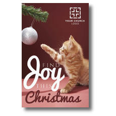 Kitten Joy Postcard