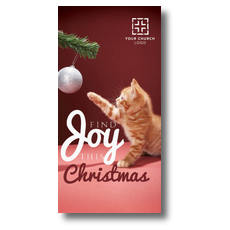 Kitten Joy XLarge Postcard