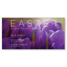 Purple Tulips XLarge Postcard