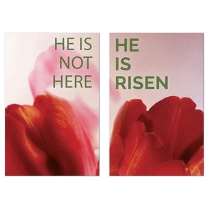 Risen Tulips Pair Wall Art