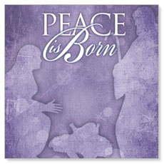 Born Peace Window Banner